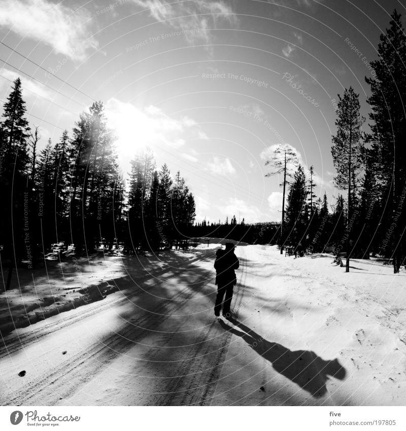 richtung kittilä Mensch Natur Himmel Baum Pflanze Winter Ferien & Urlaub & Reisen Ferne Straße Wald kalt Schnee Freiheit Eis wandern gehen
