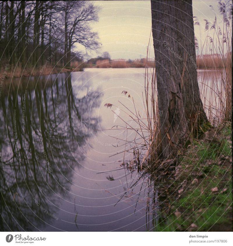 am Seeufer Natur Wasser Baum ruhig Wald Herbst Gras Landschaft braun Umwelt Idylle analog Schilfrohr Teich Mittelformat