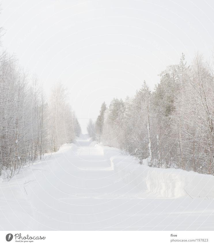 luosto XI Himmel Natur weiß Baum Pflanze Ferien & Urlaub & Reisen Winter Ferne Straße kalt Schnee Freiheit Wege & Pfade hell Eis gehen
