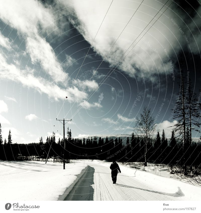 luosto XII Natur Baum Pflanze Winter Ferien & Urlaub & Reisen Wolken Ferne Straße Wald kalt Schnee Freiheit Wege & Pfade Eis wandern gehen