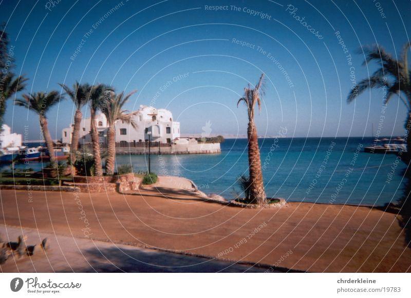 Palme in Ägypten Strand Zufriedenheit Blauer Himmel