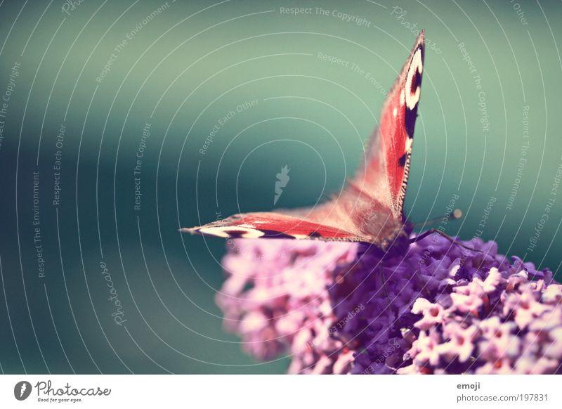 Frühlingsgefühle Blume Pflanze Sommer Tier Frühling Wärme fliegen Schmetterling Blühend verblüht Frühlingsgefühle Licht