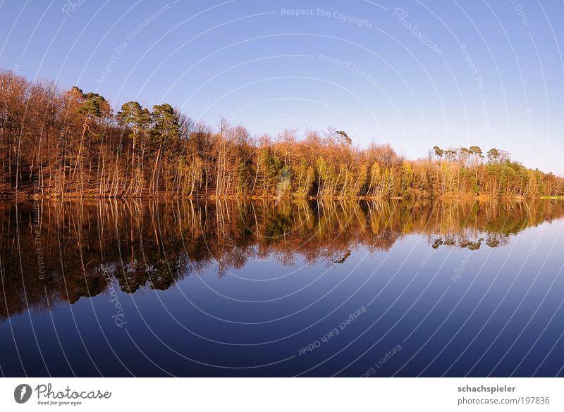 Weiherabend Natur Wasser Baum blau Einsamkeit Erholung Frühling Landschaft Stimmung braun Umwelt Horizont Ausflug Seeufer harmonisch Umweltschutz