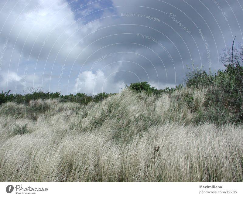 Wildwuchs in den Dünen Sträucher Strand Niederlande Sand unkultiviert