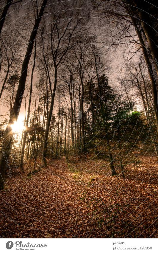 Herbstwald Natur Baum Sonne Pflanze ruhig Einsamkeit Wald Erholung Herbst Wege & Pfade Landschaft Zufriedenheit braun Umwelt gold