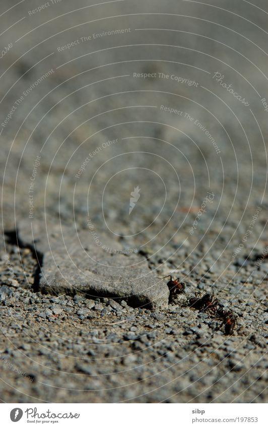 Ameisenarbeiter Arbeit & Erwerbstätigkeit Kraft Erfolg Erde Baustelle krabbeln Arbeiter Ausdauer Willensstärke fleißig Ameise
