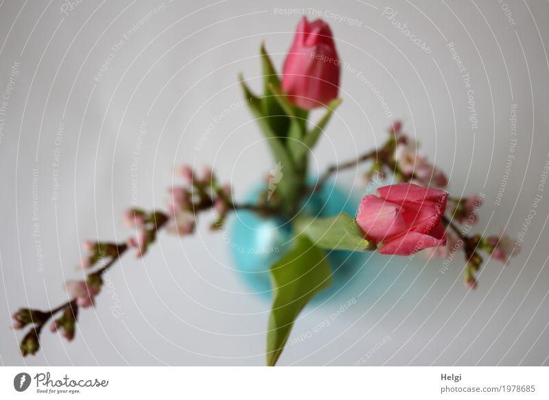 Blümchen Pflanze Frühling Tulpe Blatt Blüte Zweig Kirschblüten Vase Glas Blühend stehen Häusliches Leben ästhetisch frisch schön einzigartig natürlich braun