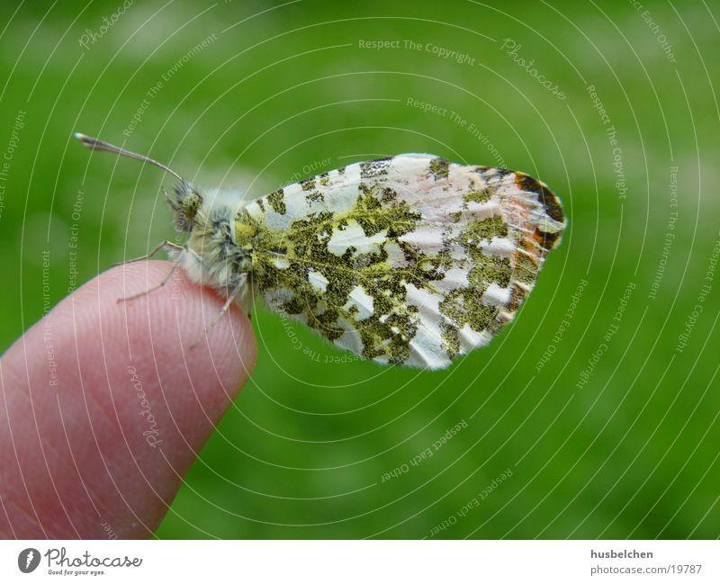 ein gast auf meinem finger Schmetterling Freundschaft Hausfreund