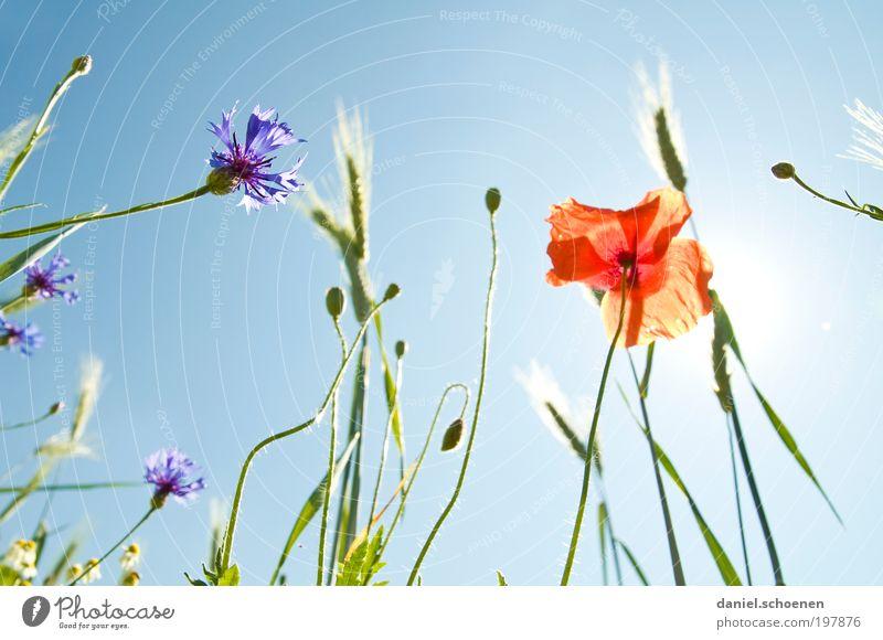 Sonnenenergie Teil 7 Natur Himmel Sonne Blume blau Pflanze rot Sommer Blüte Gras Frühling Wetter Umwelt Klima Wiese Schönes Wetter