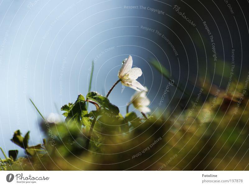 Einer von zweien... Umwelt Natur Landschaft Pflanze Urelemente Erde Luft Wasser Wassertropfen Himmel Wolkenloser Himmel Sonne Frühling Klima Wetter