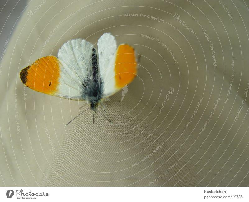ein gast auf meiner hose Frieden Vertrauen Schmetterling sanft