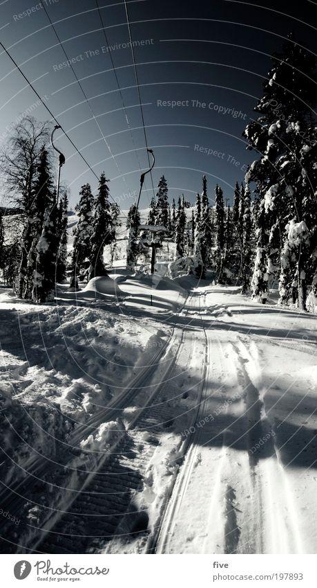 schlepplift V Himmel Natur Ferien & Urlaub & Reisen Pflanze Baum Winter Wald kalt Umwelt Wege & Pfade Schnee Freiheit Tourismus Ausflug Schönes Wetter Skifahren