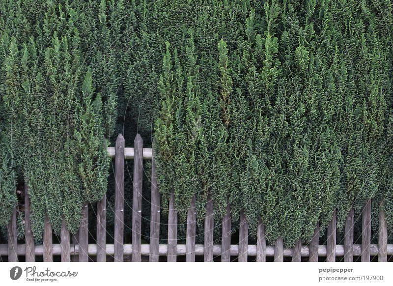 Zaun Natur Pflanze grün Holz Garten braun Zufriedenheit Wachstum Kraft Grünpflanze Nutzpflanze Gefühle