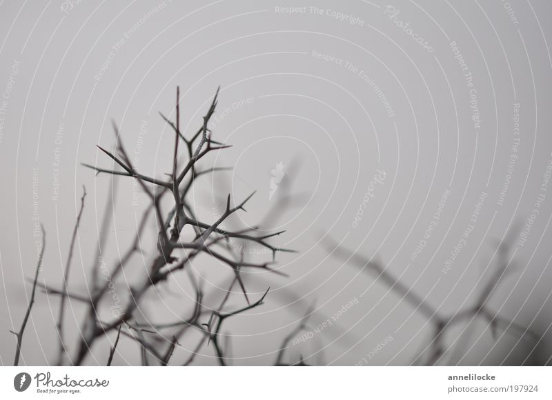 Dornenwald Natur Baum Pflanze Winter Umwelt Tod Herbst Gefühle grau Park Feld Angst gefährlich Sträucher trist Trauer