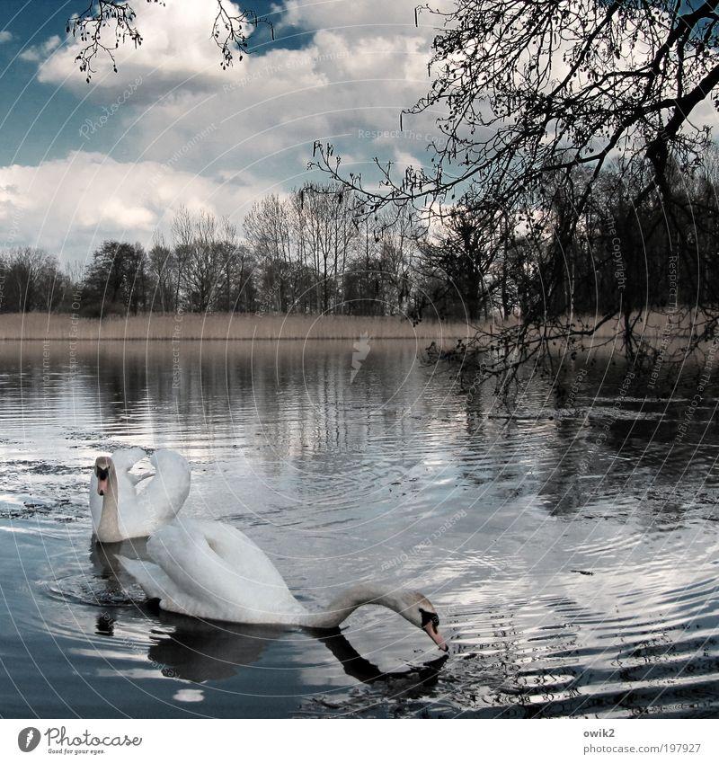 Freunde fürs Leben Umwelt Natur Landschaft Pflanze Tier Wasser Himmel Wolken Horizont Frühling Klima Wetter Schönes Wetter Baum Sträucher Schilfrohr Wald Wellen