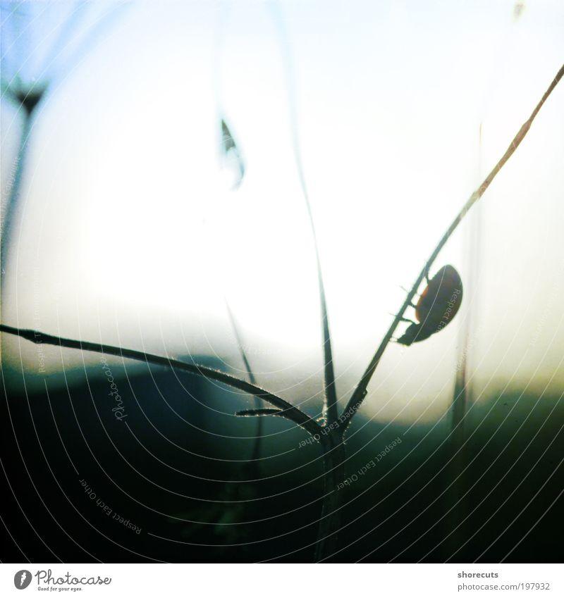 journeys Tier Gefühle Stimmung Zufriedenheit Horizont elegant Armut ästhetisch Hoffnung Gelassenheit Lebensfreude Käfer Marienkäfer friedlich