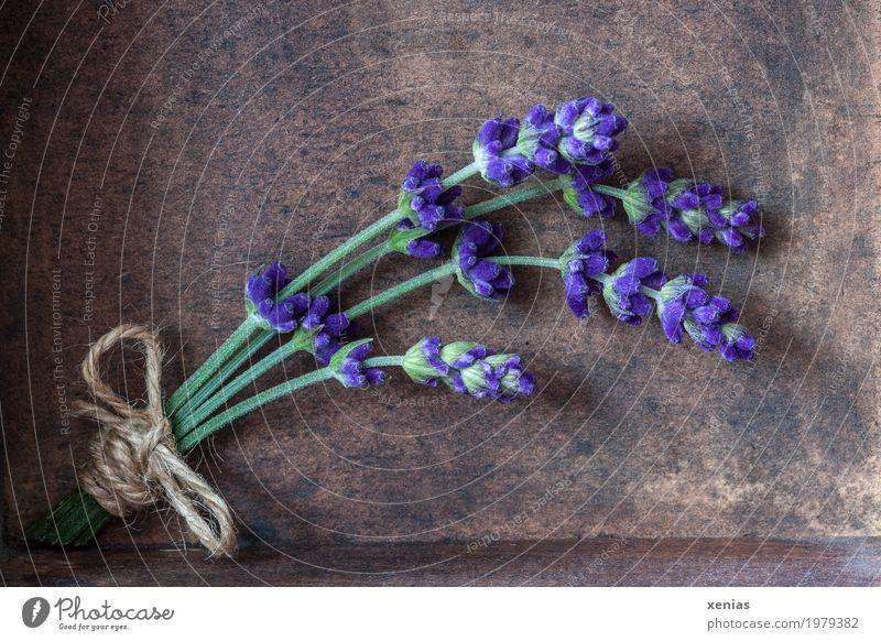 Lavendelsträußchen Kräuter & Gewürze Ernährung Bioprodukte schön Erholung Sommer Blüte Lavendelernte Blumenstrauß Schleife Holz Duft braun grün violett Schnur