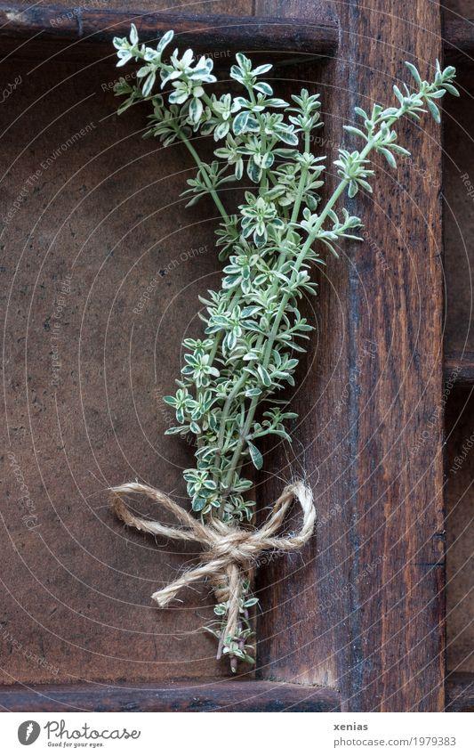 frischer Zitronenthymian Kräuter & Gewürze Thymian Ernährung Gesundheit Regal Pflanze Schleife Duft braun grün Würzig Geschmackssinn Schnur Vorrat Farbfoto