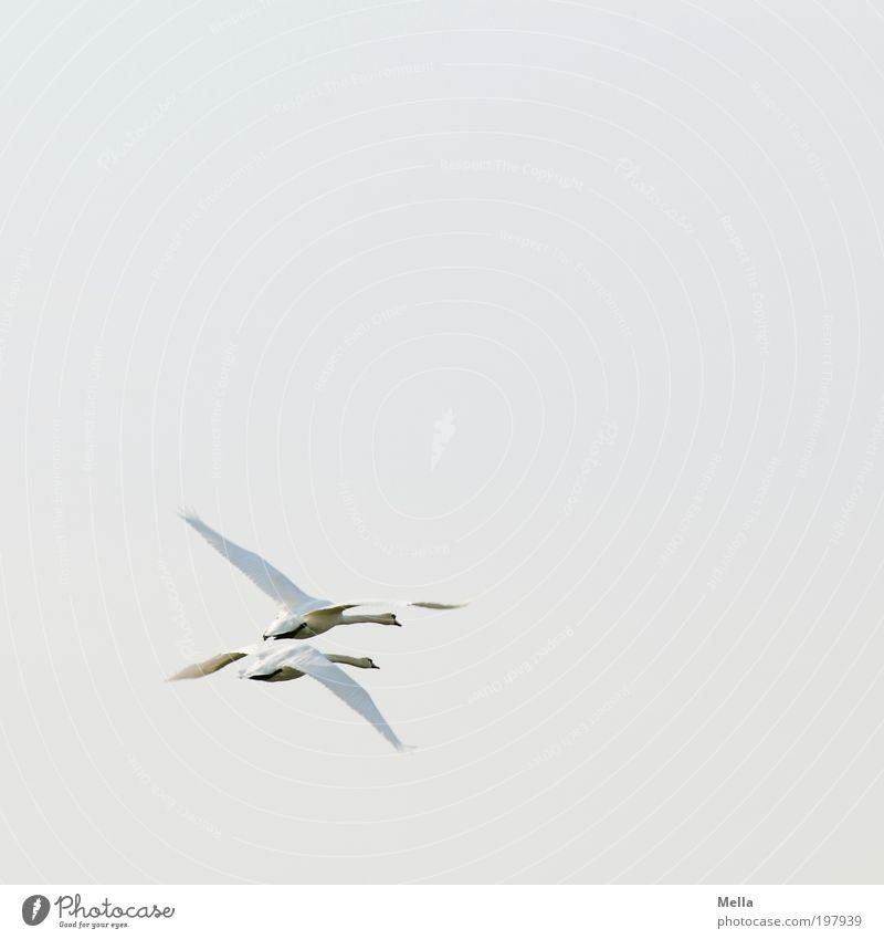 600 - Weg Natur Himmel Liebe Tier Bewegung Freiheit Luft hell 2 Zusammensein Vogel Tierpaar Umwelt fliegen frei paarweise