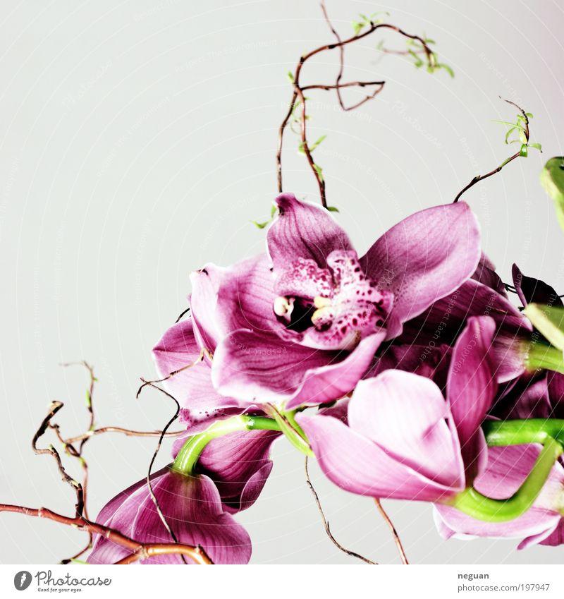 spring elegant Glück Dekoration & Verzierung Pflanze Blume Orchidee Blüte exotisch frisch schön positiv weich rosa rot Frühlingsgefühle Farbfoto Innenaufnahme