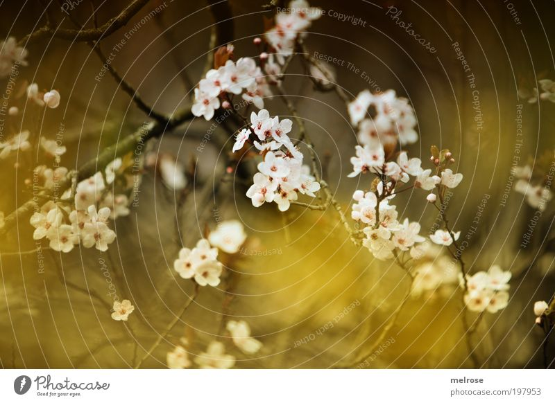 Blütentraum Erholung Gefühle Bewegung natürlich Glück Zeit Freiheit Stimmung träumen Zufriedenheit Freizeit & Hobby Fröhlichkeit Blühend berühren Hoffnung
