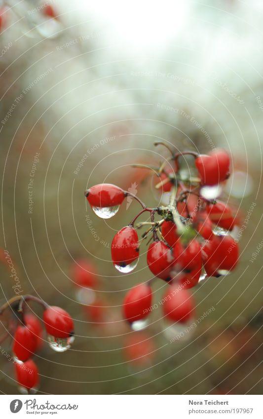 weil es traurig war ... Natur Wasser schön Baum Pflanze Sommer Tier Einsamkeit Umwelt Landschaft Frühling Blüte Traurigkeit träumen Park Regen