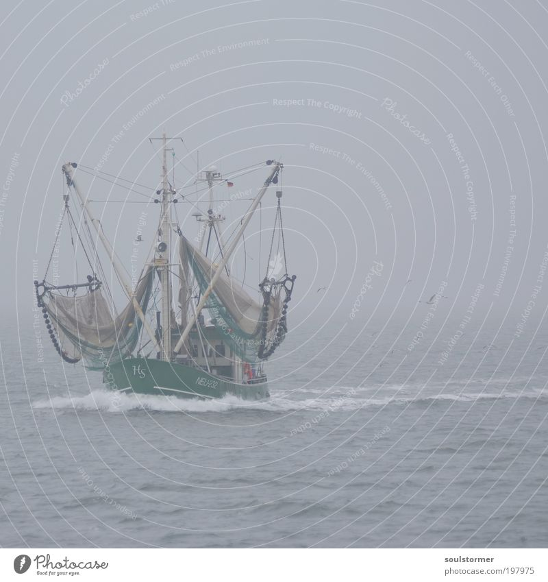 das ist ein Boot! Wasser Einsamkeit Traurigkeit grau Stimmung Vogel Arbeit & Erwerbstätigkeit Horizont Nebel Wellen Ernährung fahren Netz Nordsee