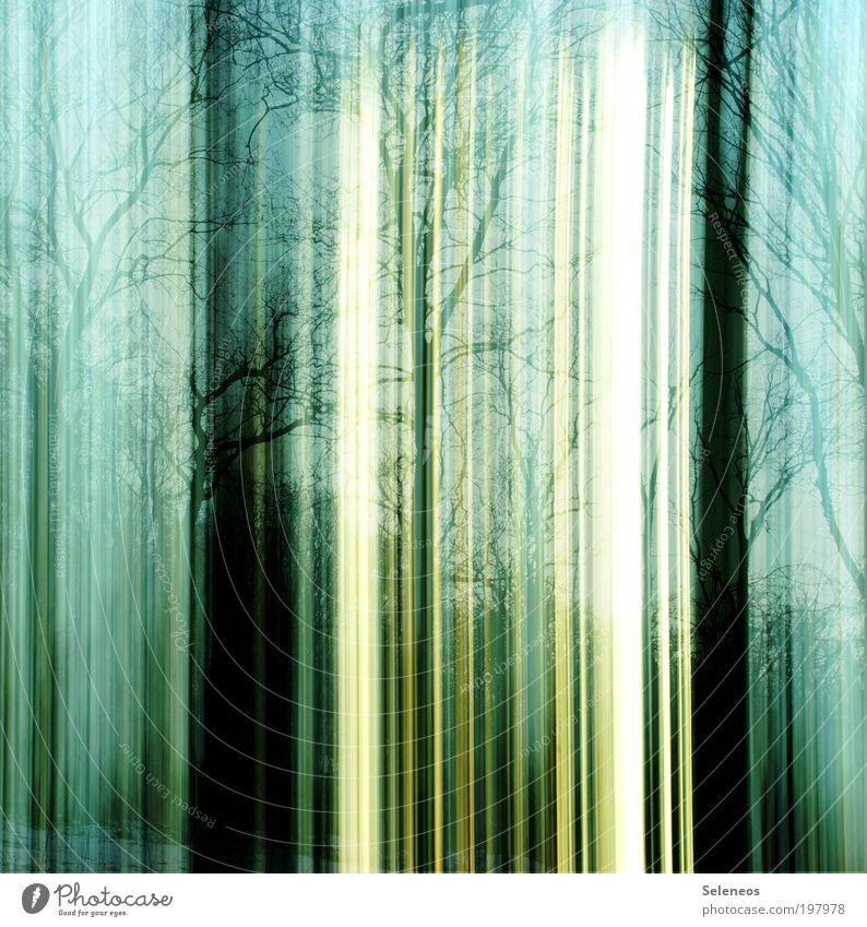 ich glaub ich steh im Wald Ausflug Ferne Winter Technik & Technologie Energiewirtschaft Sonnenenergie Industrie Kunst Umwelt Natur Landschaft Pflanze Luft