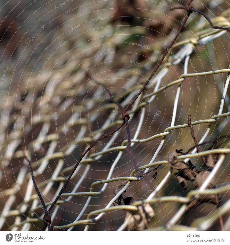 zweifache Einzäunung alt Freiheit braun Hoffnung Sicherheit Netzwerk kaputt bedrohlich Wandel & Veränderung Schutz Vergänglichkeit Grenze Zaun Wachsamkeit