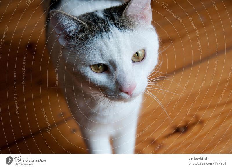 Paul. Tier Leben Katze Tiergesicht Fell Haustier