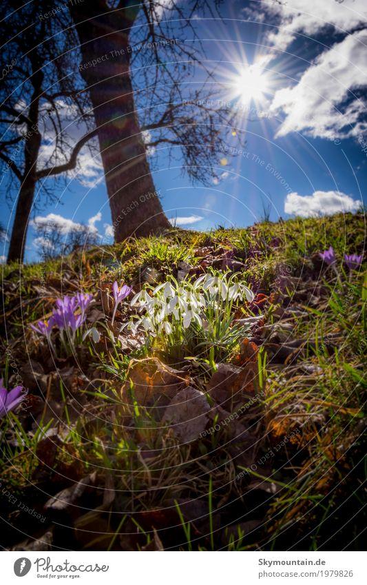 Erste warme Sonnenstrahlen Umwelt Natur Landschaft Pflanze Frühling Klima Wetter Schönes Wetter Wärme Blume Garten Park Wiese Feld Wald blau braun mehrfarbig