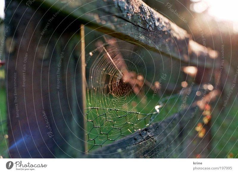 Pfui Spinne Natur schön ruhig Garten ästhetisch Hoffnung Sicherheit Vertrauen Glaube Zaun Spinne Spinnennetz Optimismus Frühlingsgefühle spinnen