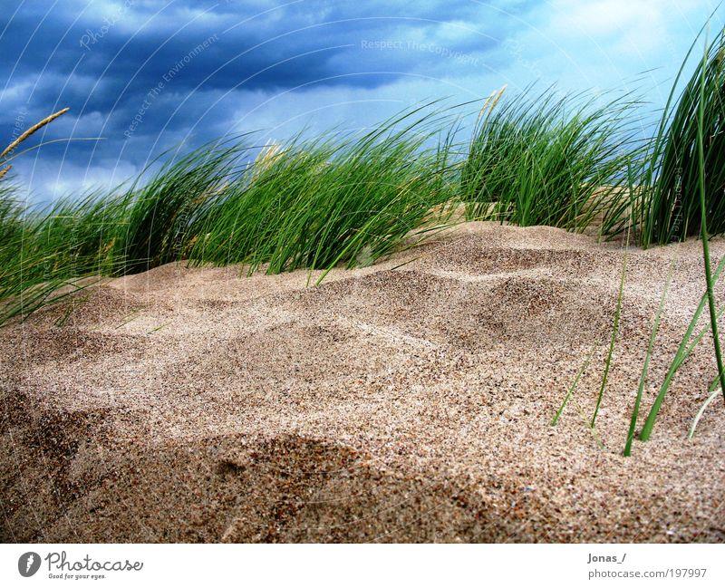 unter Wasser?! Himmel Natur Pflanze Strand Wolken Freiheit Landschaft Umwelt Gras Sand Stimmung Luft Wetter Erde Wind ästhetisch