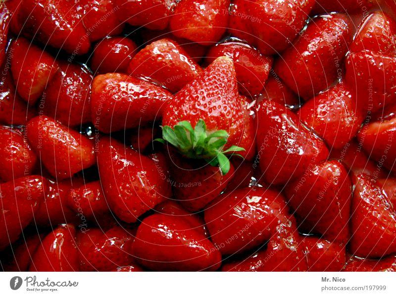 rot mit geschmack Pflanze Umwelt Frühling Frucht glänzend Lebensmittel frisch Ernährung süß lecker Bioprodukte Vitamin Erdbeeren Dessert Vegetarische Ernährung