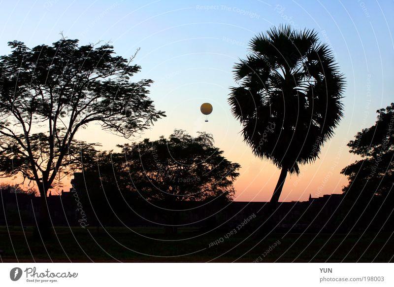 Ballon-Abend Natur Himmel Baum blau Pflanze Ferien & Urlaub & Reisen schwarz Ferne Wald dunkel Holz Park Landschaft Luft Stimmung rosa