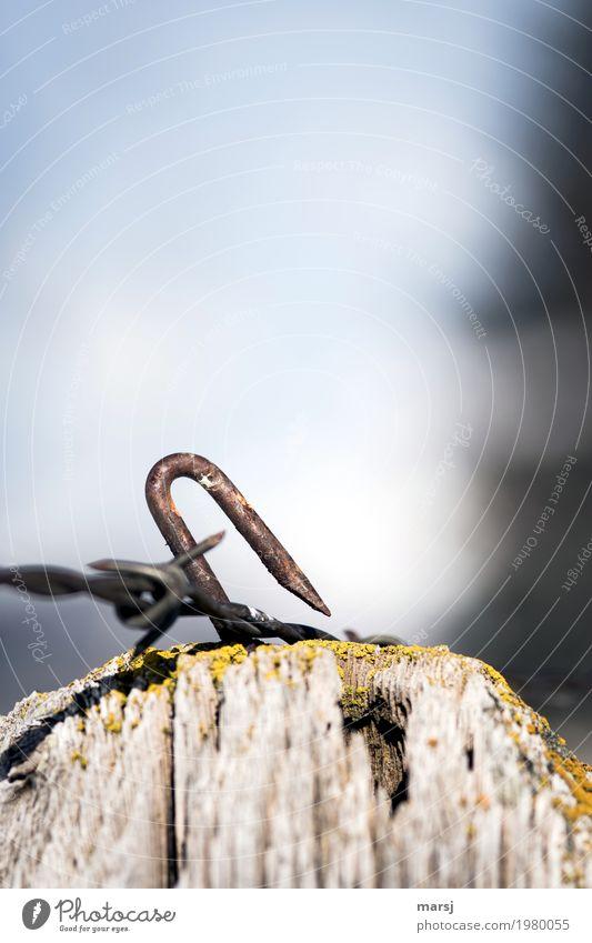 Schräglage mit gefährlichem Ende Agraffe U-Form Nagel Spitze Metall Stahl Rost bedrohlich einfach Sicherheit Schutz Enttäuschung Misserfolg Missgeschick