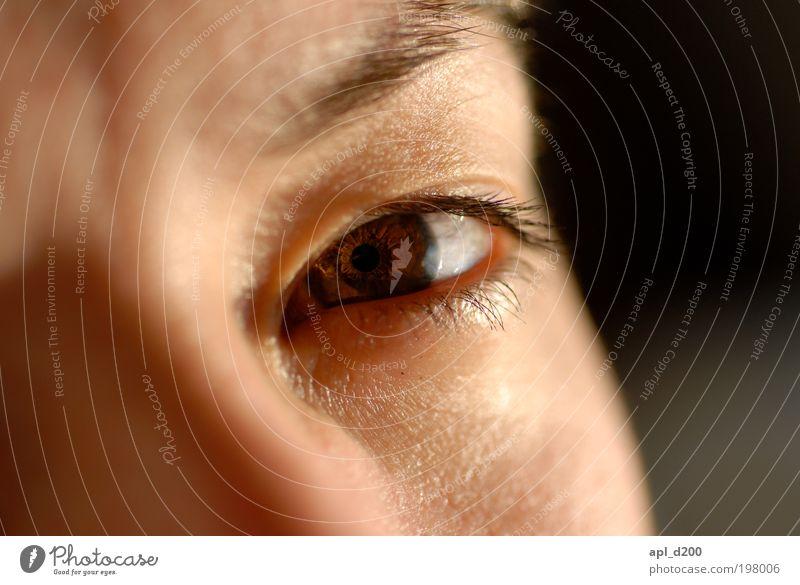 brown eyed girl feminin Junge Frau Jugendliche Auge 1 Mensch 18-30 Jahre Erwachsene Blick authentisch braun Pupille Gesicht Farbfoto Gedeckte Farben