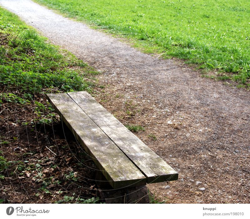 Pause machen? Natur grün Sommer schwarz ruhig Erholung Umwelt Landschaft Wiese Holz Gras Wege & Pfade Frühling Garten Park Erde