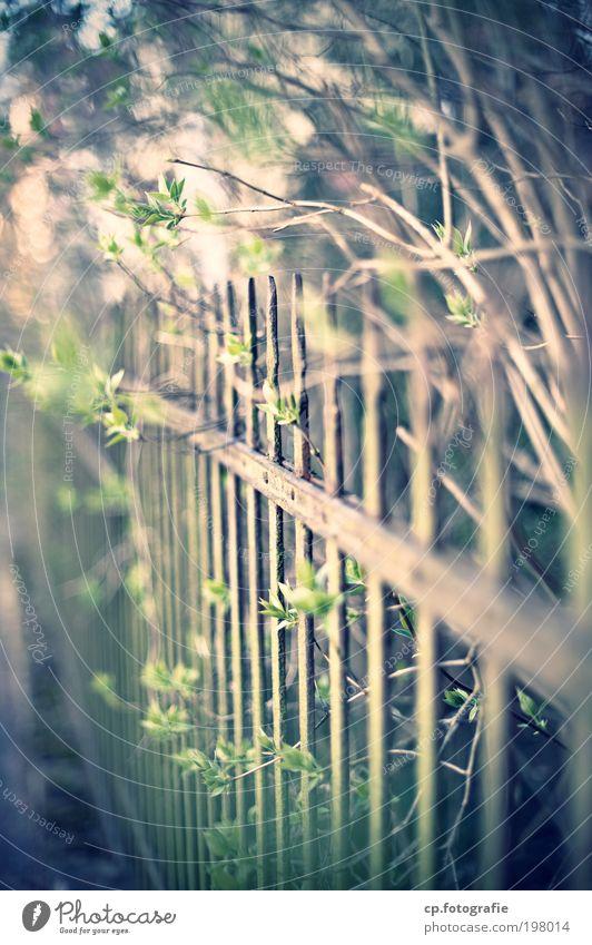 Zaun #2 Häusliches Leben Gärtner Schönes Wetter Pflanze Sträucher Garten alt retro vernünftig Ordnungsliebe Kontrolle Farbfoto Außenaufnahme