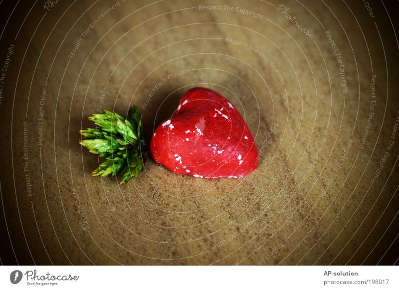 HERZlich grün rot Pflanze Liebe Gefühle Holz braun Herz Dekoration & Verzierung Häusliches Leben Romantik Zeichen Küssen Verliebtheit Treue Sympathie