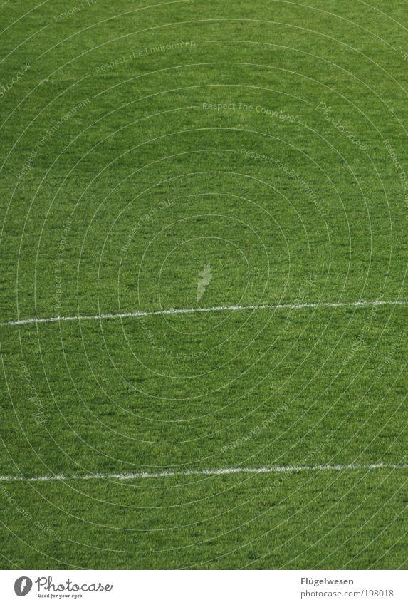Eine Saison geht zu Ende ;-( Sport Ballsport Fußball Sportstätten Fußballplatz Rasen Linie Farbfoto Außenaufnahme Tag Feldlinie Sportrasen Menschenleer