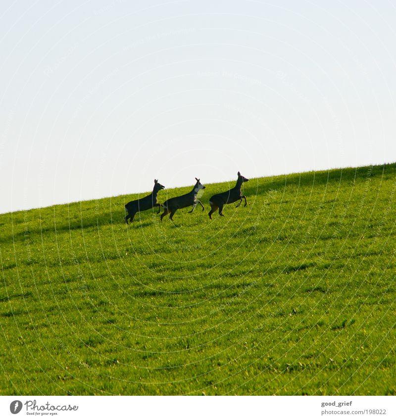 DreiBock Umwelt Landschaft Himmel Sommer Garten Wiese Tier Wildtier 3 Tierfamilie blau grün Gefühle Reh Rehkitz Wildfleisch Rothirsch Hirsche Farbfoto