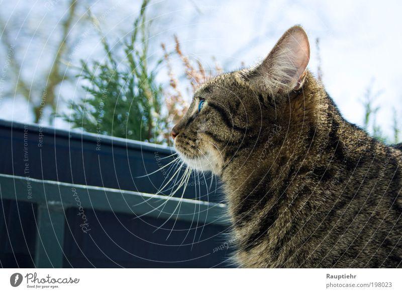 Finally managed. Haustier Katze 1 Tier beobachten träumen Farbfoto Außenaufnahme Tag Tierporträt