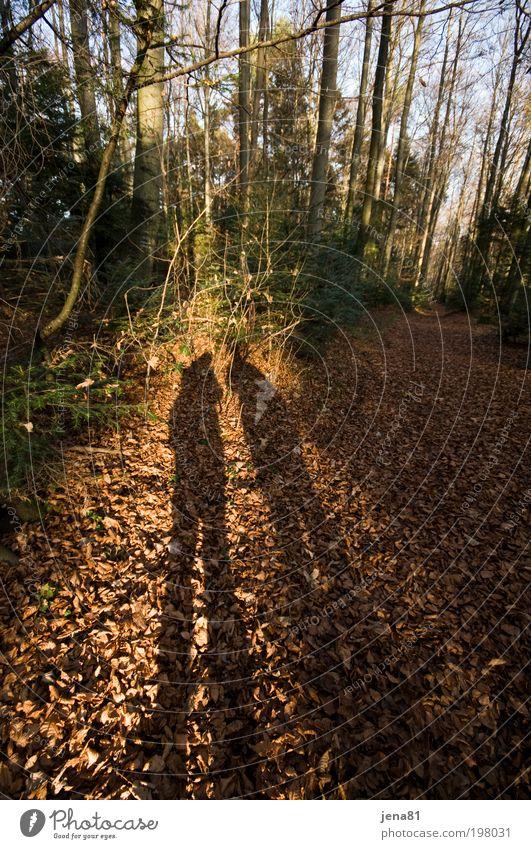 stämmig Mensch Natur Baum Pflanze gelb Wald Leben Herbst Paar Freundschaft braun Zusammensein Umwelt gold Erde