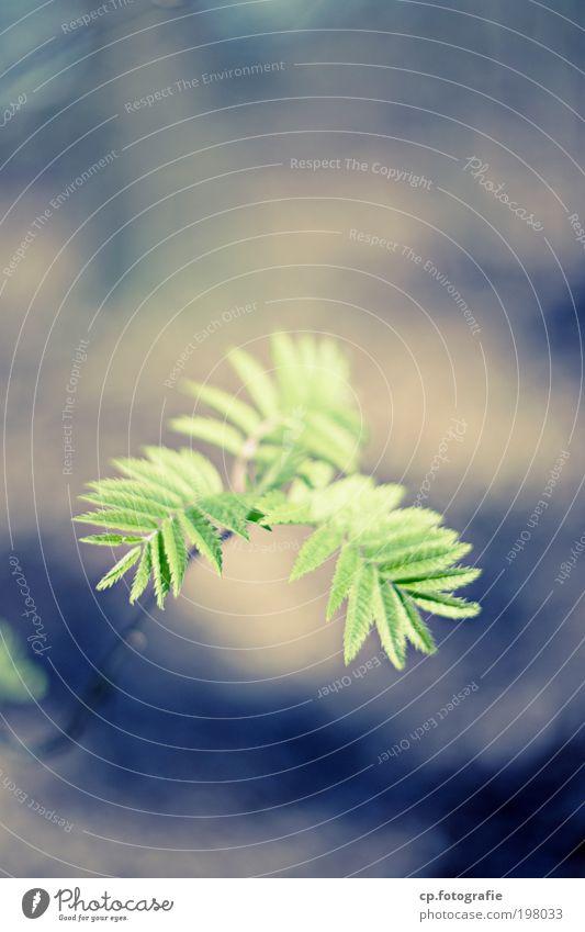 Junge Triebe Natur grün schön Baum Pflanze Blatt Umwelt Frühling wild natürlich Wachstum ästhetisch Schönes Wetter Lebensfreude Gartenarbeit Gärtner