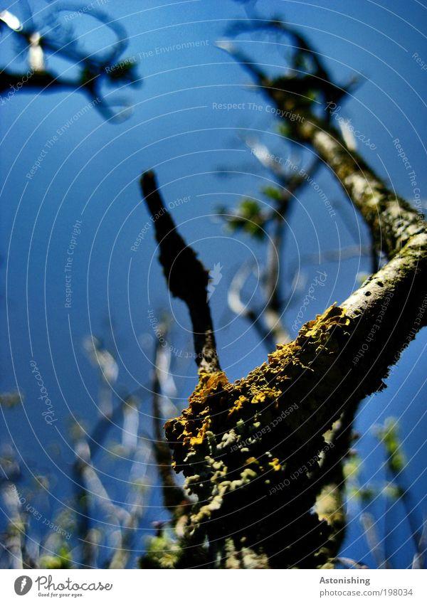 UP-UP-UP Natur Himmel Baum blau Pflanze Sommer schwarz gelb oben Garten Landschaft Wetter Umwelt hoch Wachstum Sträucher