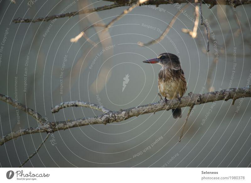 Schnabeltier Pflanze Baum Tier Ferne Herbst natürlich Küste klein Garten Freiheit Vogel Ausflug Park Wildtier Ast Seeufer