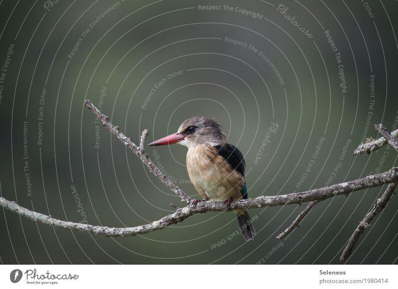 Braunkopfliest Natur Baum Tier Wald Umwelt klein Garten Freiheit Vogel Park frei Flügel nah exotisch Tiergesicht Schnabel