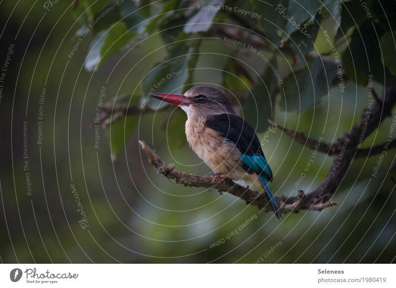 Federleicht Natur Pflanze Sommer Baum Tier Umwelt klein Garten Freiheit Vogel Park Ausflug Wildtier Flügel Ast niedlich