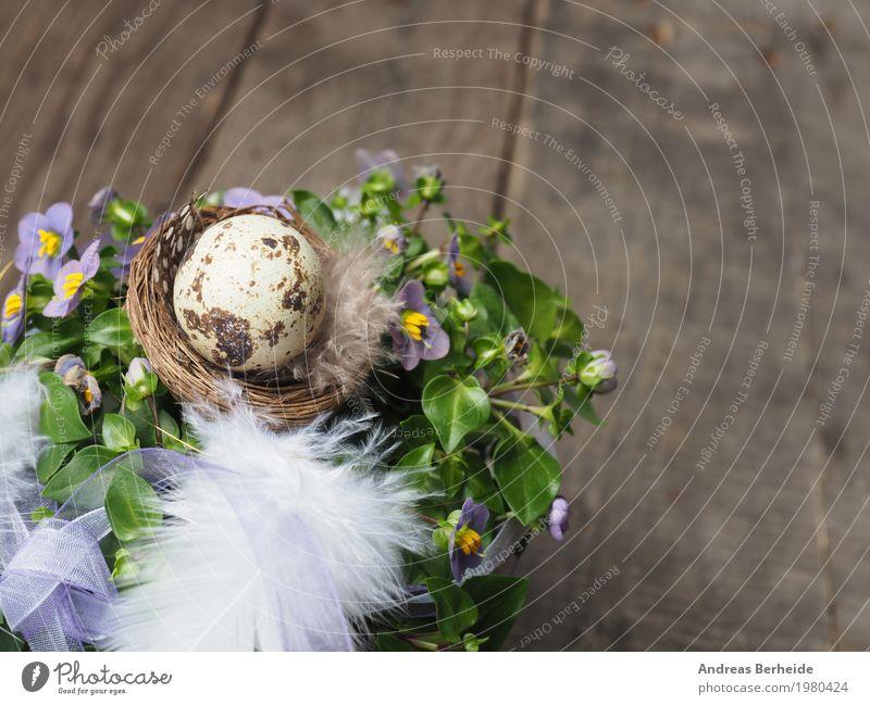 Osternest Natur Blume Design rosa Feder Symbole & Metaphern Veranstaltung Holztisch Osterei Nest Ei